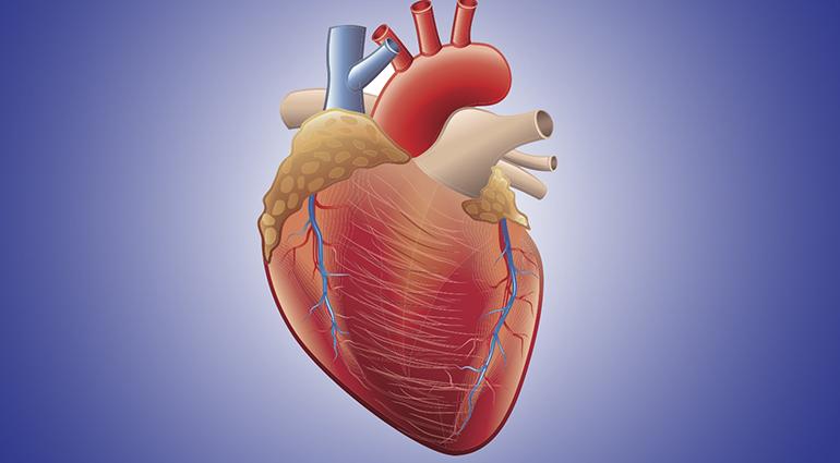 Tender Hearts